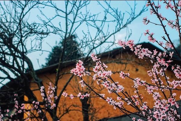 Hoa đào tại Hà Giang